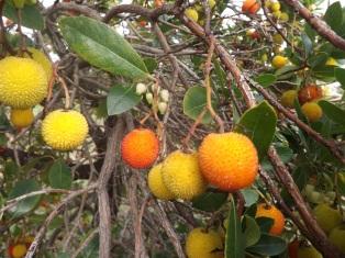 Belos frutos estes!