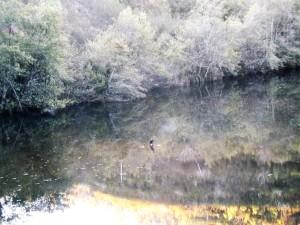 No espelho de água da Ribeira-de-Eiras com todos os reflexos magníficos observo um corvo marinho pousado numas pedras no meio da ribeira...