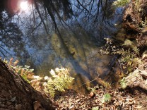 A água límpida permite ver o fundo.