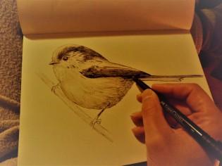 Já que não consegui fotografa-lo, sempre posso desenha-lo...