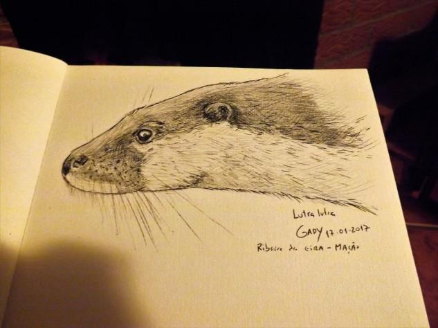 Um pequeno esboço de uma lontra europeia.
