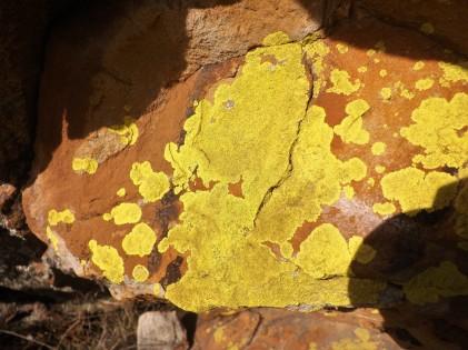 Líquenes amarelos salpicam esta rocha.