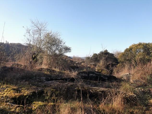 Nas zonas mais rochosas, apenas se encontram pequenas árvores entre elas aroeiras.