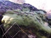 Belo adorno nesta rocha, um bonito manto verde.