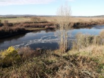 Poluição no rio Tejo.