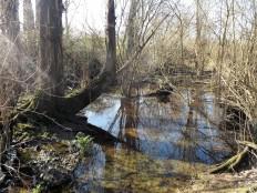 Uma zona de choupos que é frequentemente alagada pela subida e descida da água.