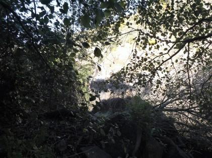 Arboredo