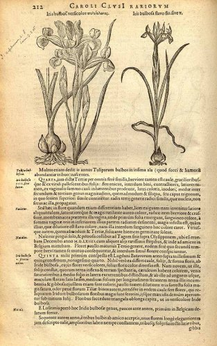 """Curtis's Botanical Magazine, vol.18: t. 679 (1803) [S.T. Edwards]"""