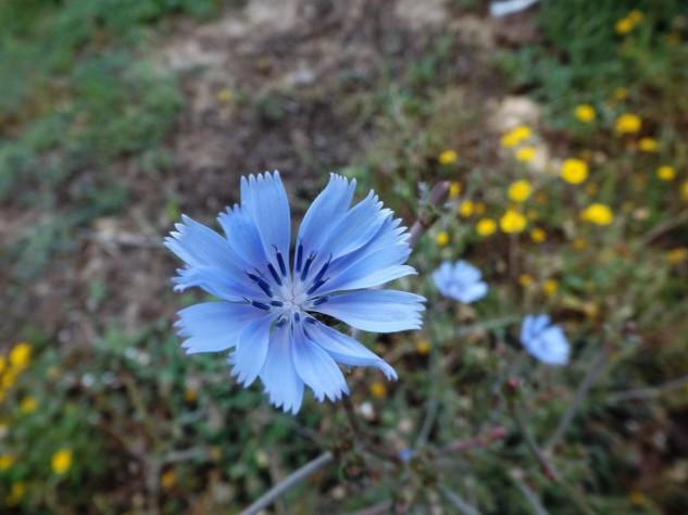 """Uma """"flor"""" de um azul intenso."""