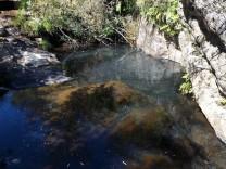 A sujidade ao cimo de água é originaria folhas e sementes de acácia.