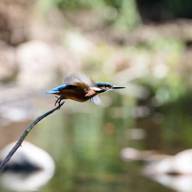 Com uma máquina melhor dá para ver melhor a beleza desta ave.