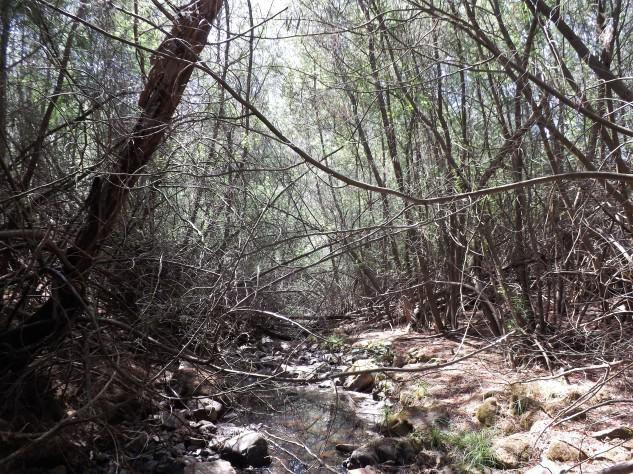 Um torço da ribeira rodeado de acácias, onde pude constatar a falta de biodiversidade, parecendo só ali existirem mesmo as acácias.
