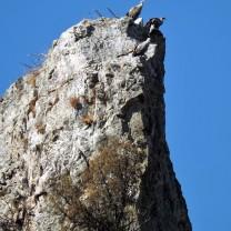 """Abutre fouveiro também conhecido por """"grifo"""". Nome cientifico """"Gyps fulvus""""."""