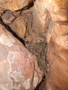 Por entre fendas existem ninhos, este provavelmente de alguma alvéola...