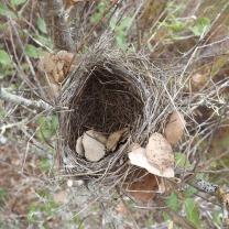 Um ninho velho, alguém adivinha de quê?!