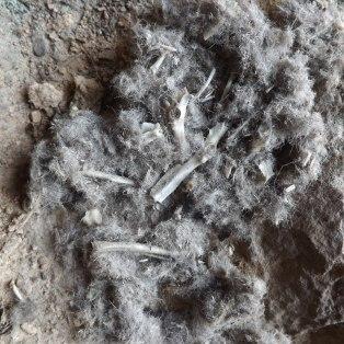 """Depois de desfeita a """"plumada"""" podemos observar ossos e pelos, estas sugerem que o alimento deste Bufo Real terá sido um pequeno mamífero."""
