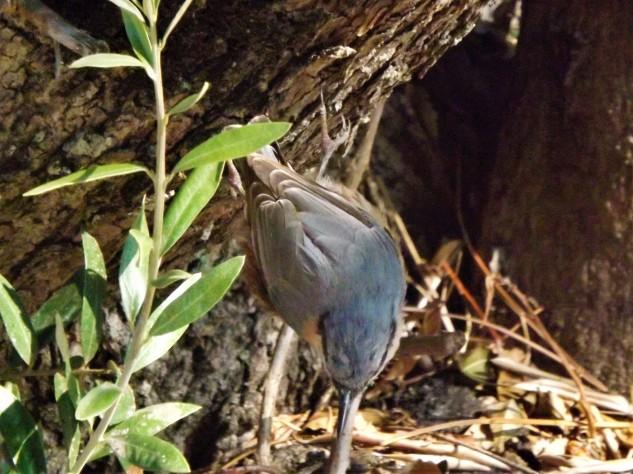 Não esperava encontrar por aqui esta pequena ave.