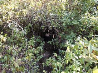 Por entre a vegetação algo escuro...