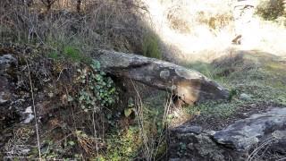 Pequenas pontes para dar acesso aos terrenos antes cultivados.