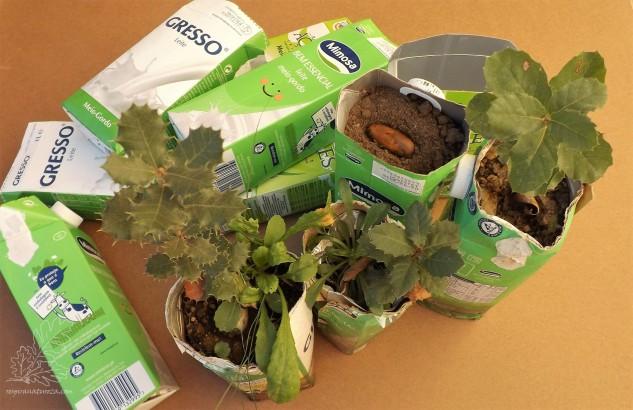 Nestes pacotes tenho árvores de carrasco, carvalho-cerquinho e sobreiro.