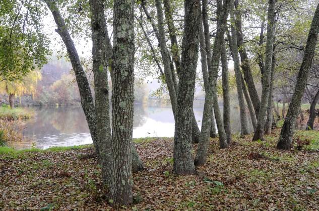 Os bosques com amieiros formam habitats magníficos.