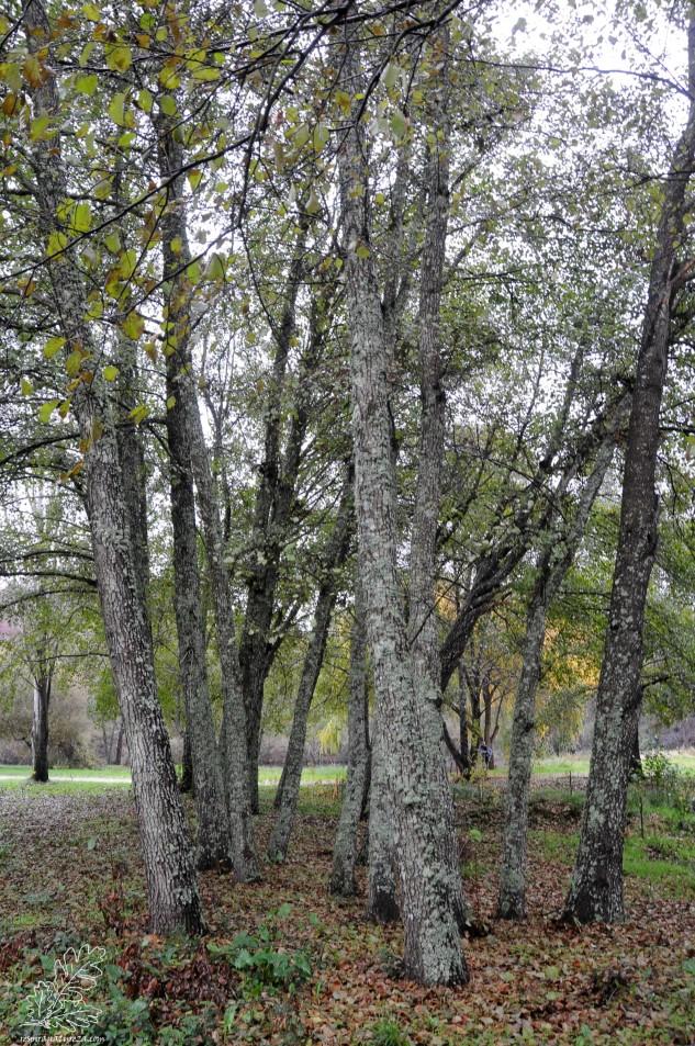 Um amial é um local cheio de vida pelo que a sua preservação é fundamental para o bom funcionamento dos habitats ribeirinhos.