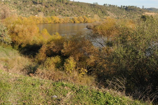 Por esta altura a paisagem junto o Tejo veste-se de outras cores. Ocres e amarelos revelam que as árvores já se aprontam para o inverno...