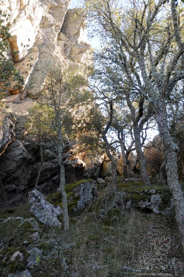Já do lado de onde venho a frescura é outra, nas rochas cresce musgo e o frio sente-se bem melhor.