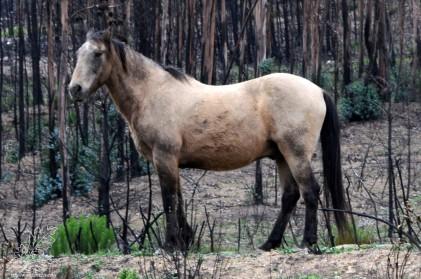 Cavalo do Vale do Grou