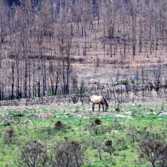 """Ontem pela tarde quando passava perto do Vale do Grou, por terras quase inóspitas, consequência dos incêndios do ano passado, heis que vislumbro ao longe um """"fantasma""""..."""