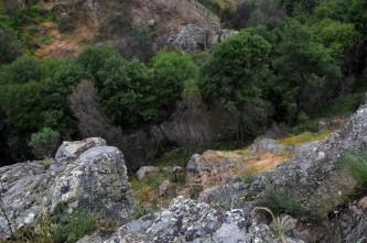 No fundo do vale uma mancha verde de árvores. São amieiros que resistiram ao incêndio do ano passado.