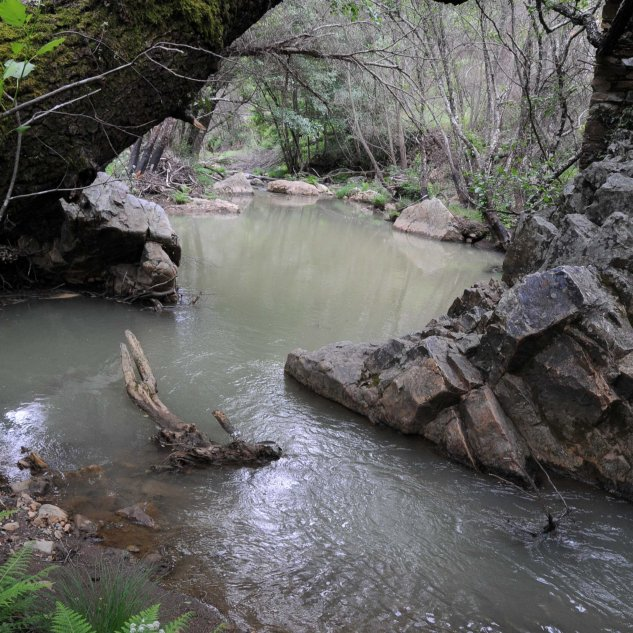 Com as enxurradas a água ganha uma cor acastanhada...