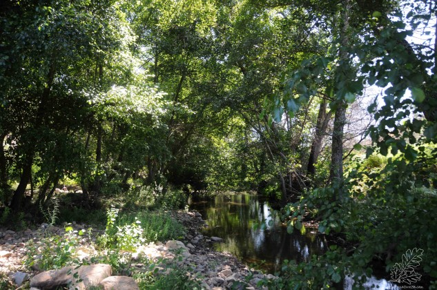 Floresta de Amieiros na Ribeira de Eiras