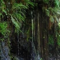 Ribeira do Fundão na Zimbreira. A água escorre das paredes da serra.