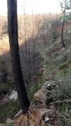Por este vale acima passa ribeira do Castelo que nasce no sopé do Bando dos Santos.