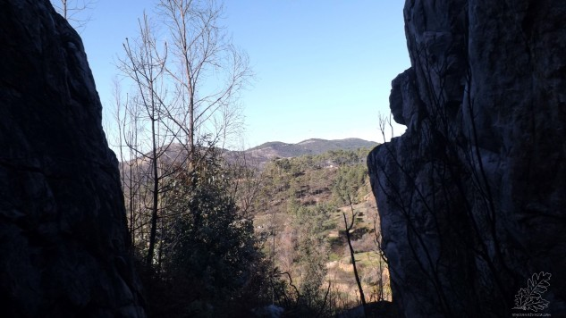 Tirando os eucaliptos, uma bela paisagem.