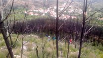 Pelos campos fomos erradicando as plantas invasoras existentes.