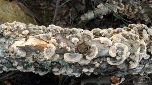 Na floresta a morte de um ser é uma oportunidade para os demais, neste caso centenas de cogumelos tiram partido em seu benefício.