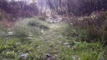 Rente ao chão uma enchente de teias de aranha parecem querer trazer magia a este local.
