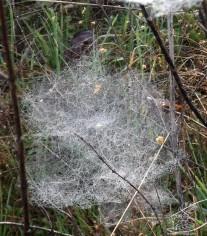 Teia de aranha.