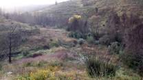 Por estes campos abandonados muito se cultivou no século passado.