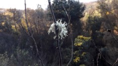 Os líquenes funcionam como bio-indicadores da qualidade do ar, pois sua existência no ambiente indica baixa poluição.