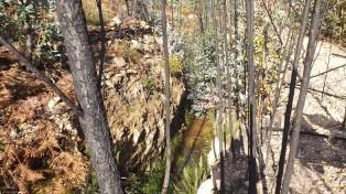 Uma nascente de água de água está agora cativa de eucaliptos. No coments!