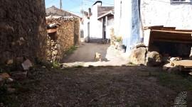 Um pequeno cão aproxima-se contente por ver gente na rua…