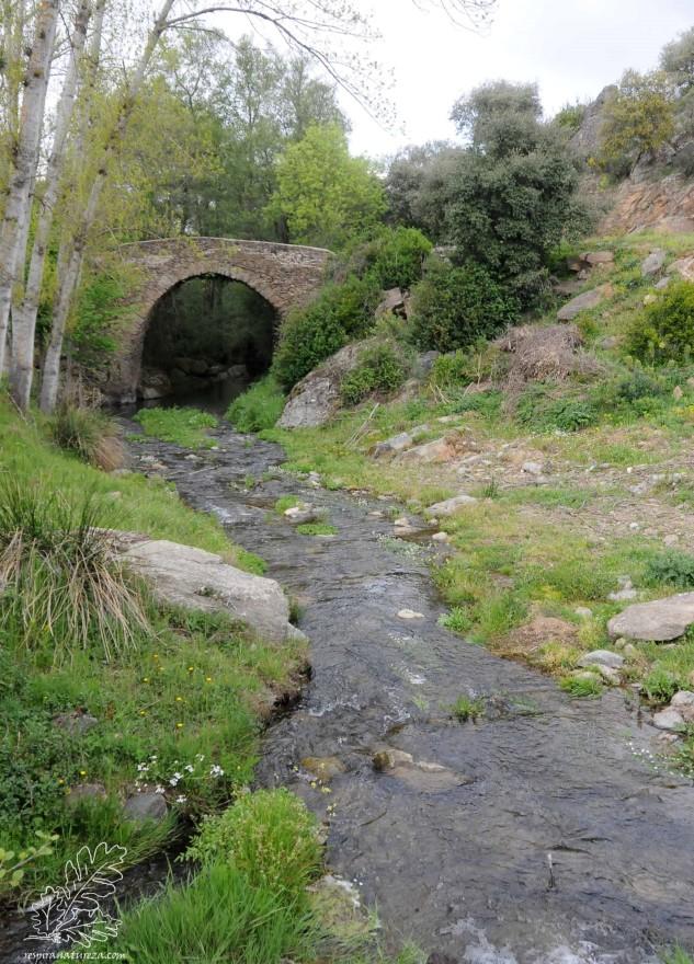 Curiosamente esta ribeira corre para norte, fintando as serras e montes, ziguezagueando no fundo de vales, até encontrar o rio Maçãs.