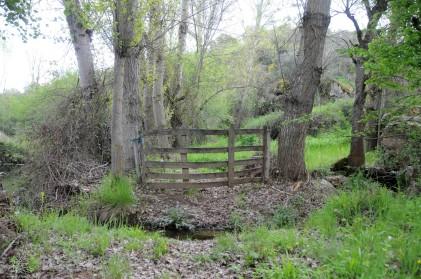 Ao lado da ribeira um lameiro, um local fresco onde cresce bom pasto para o gado.