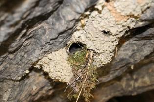No topo do abrigo está um ninho que não me é estranho.