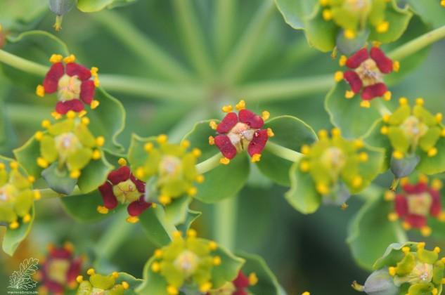Uma bonita planta endémica do nosso país.