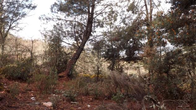 Há cerca de uma semana caminhava em termos transmontanos, algures na serra de Figueira – Mogadouro…