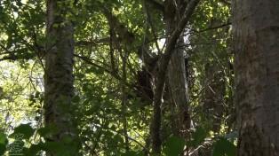 Este tipo de bosque é muito importante, se repararmos fornece uma sombra fantástica, as copas das árvores são densas e impedem que os raios solares aqueçam em demasia o solo.